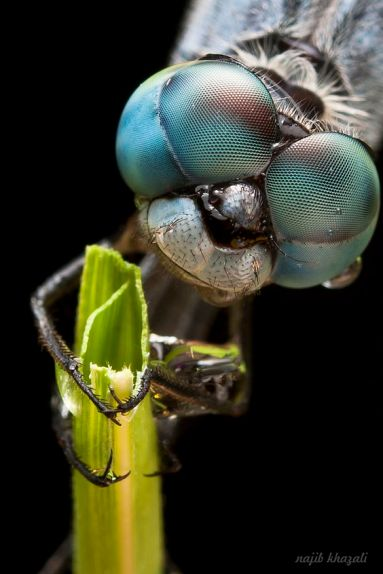 eye - insect 4