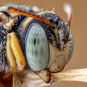 eye - insect 5