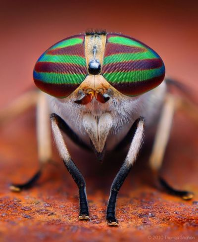 eye - insect 9