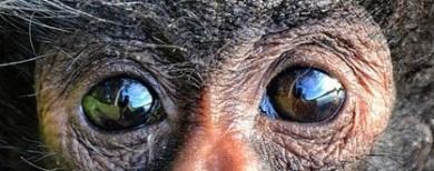 eye - monkey