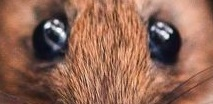 eye - mouse q