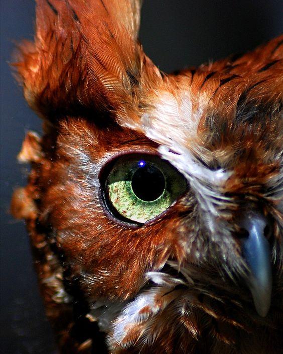 eye - owl 2