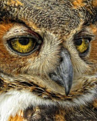 eye - owl 3