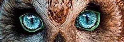 eye - owl 5