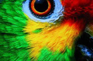 eye - parrot 2