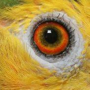 eye - parrot 3