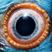 eye - parrot 4