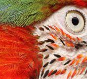 eye - parrot 5