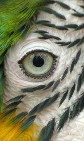 eye - parrot 6
