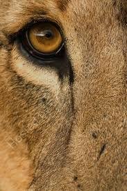eye - puma 2