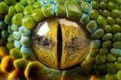 eye - python