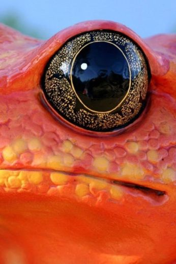 eye - reptile