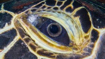 eye - sea turtle 3