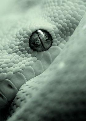 eye - snake 2