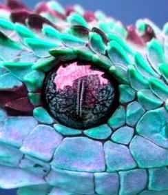 eye - snake 3