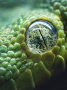 eye - snake