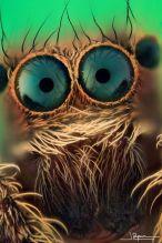 eye - spider 2