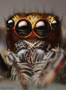 eye - spider