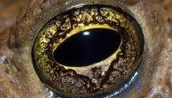 eye - toa