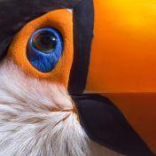 eye - toucan 2