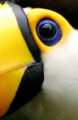 eye - toucan 3