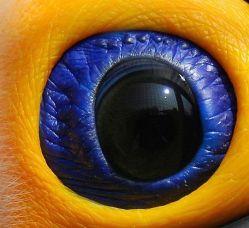 eye - tucan