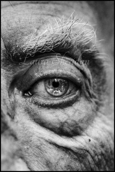 human eyes 8