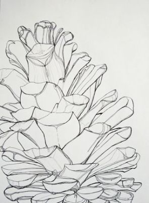 contour line drawing example